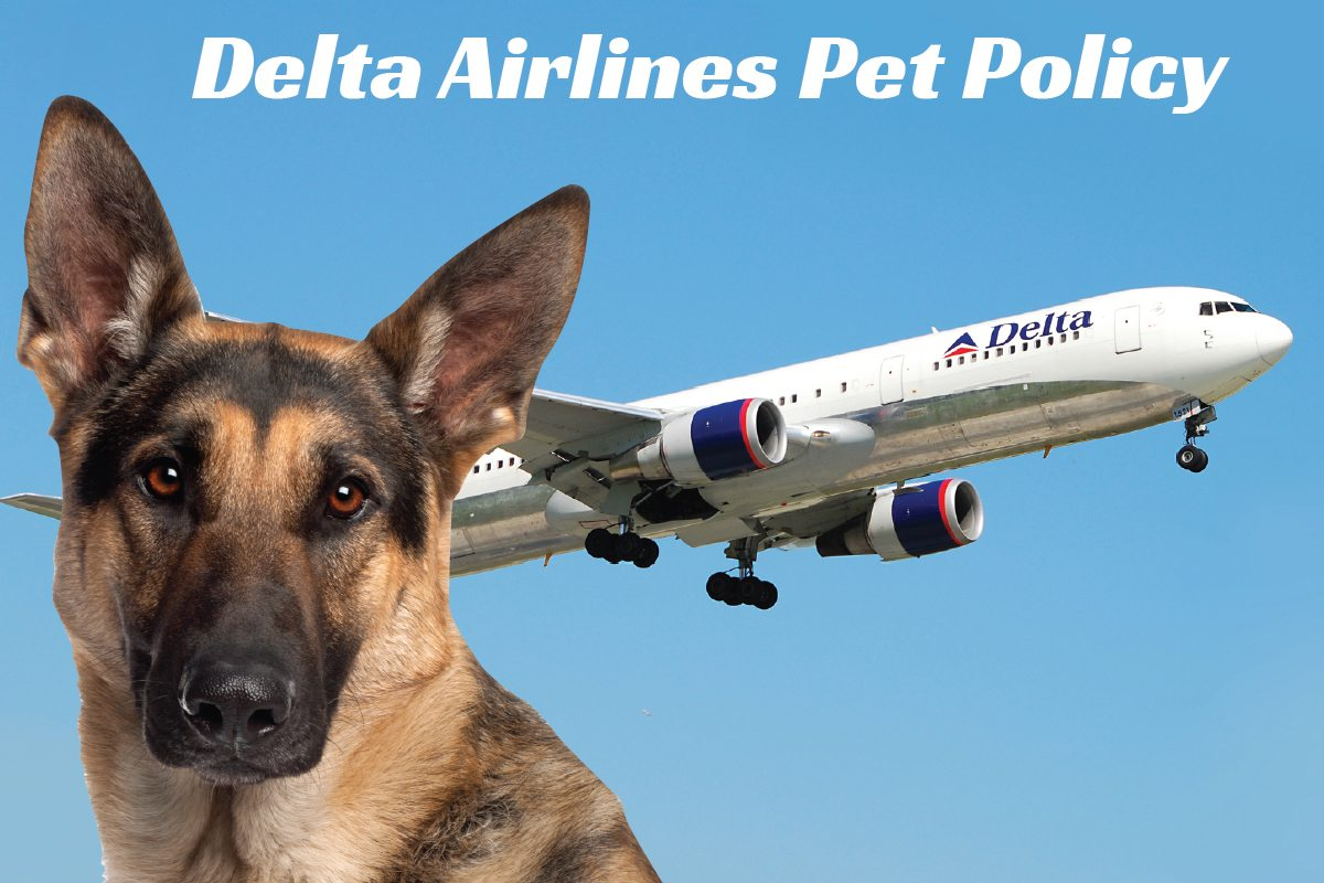 Delta Airlines Pet Policy